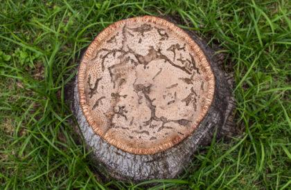 treeremoving2