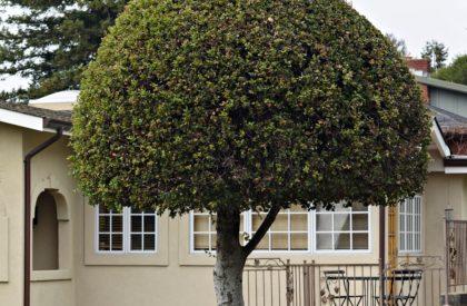 Miguels Dallas Tree Service Tree Trimming Tree Trimmers Dallas